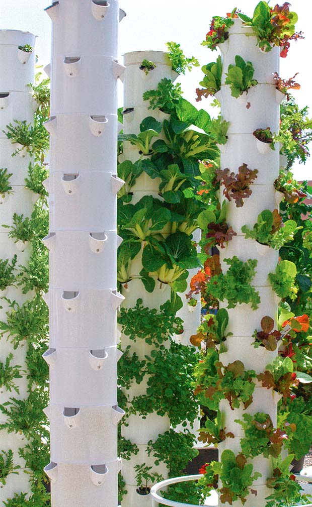 A beginner's guide to growing with hydroponics - thisNZlife