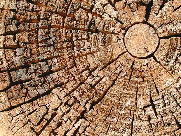 radial cracks spread out from the centre of the firewood when it's dry enough