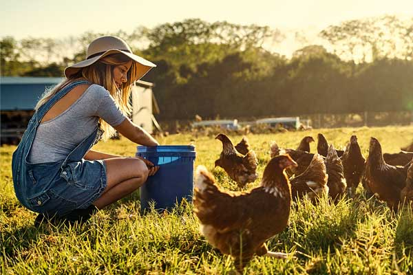 Chook Hat Meaning
