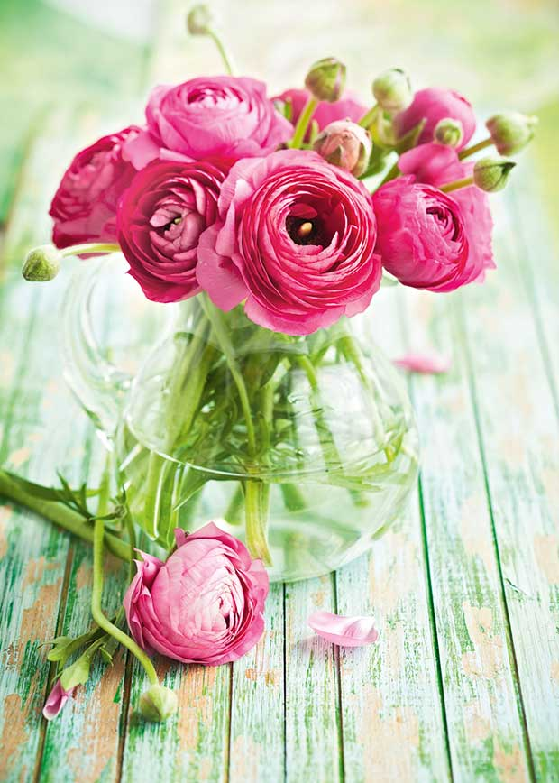 rananculus spring blooms flowers