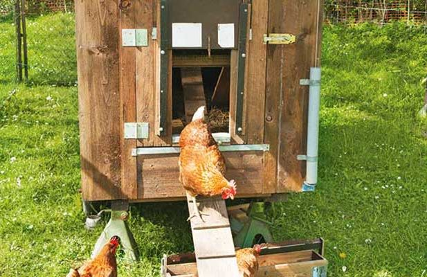 Pet Supplies Universal Hand Made Chicken 2 Bird Nest Box For Inside Outside Coop Hut House Refreshing And Beneficial To The Eyes