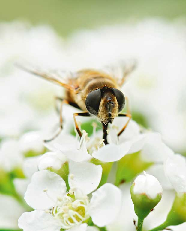 3 things to do before getting bees - thisNZlife