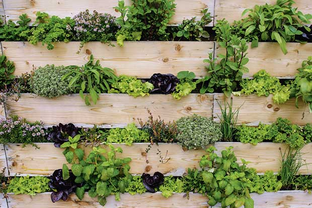 Vertical Gardening 101 How To Use Vertical Planting To Maximise A