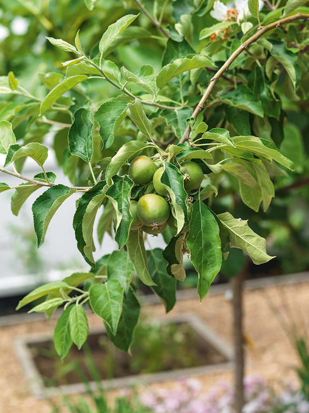 How To Choose The Perfect Spot To Plant A Fruit Tree