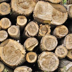 Drying firewood